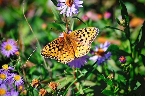 Art Print featuring the photograph Teton Butterfly by Greg Norrell