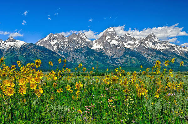 Art Print featuring the photograph Teton Peaks And Flowers by Greg Norrell