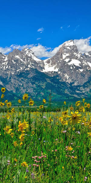 Photograph - Tetons Peaks And Flowers Center Panel by Greg Norrell