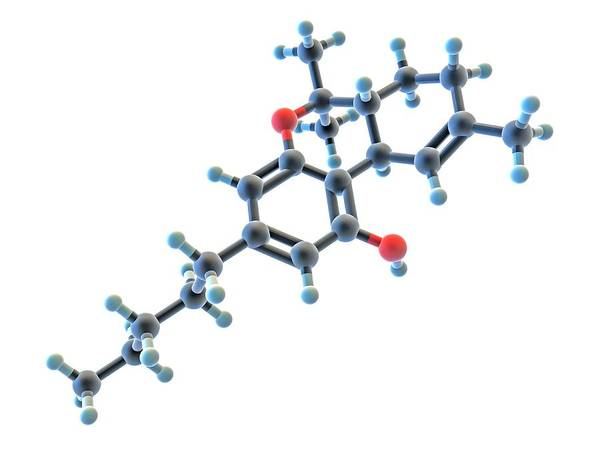 Molecular Wall Art - Photograph - Tetrahydrocannabinol Thc Drug Molecule by Alfred Pasieka/science Photo Library