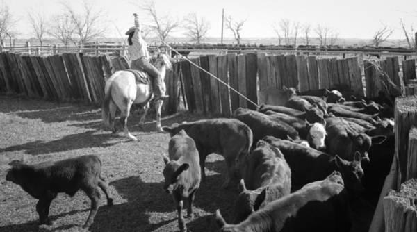 Photograph - Texas 12 by Diane Bohna