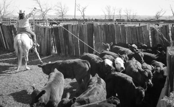 Photograph - Texas 13 by Diane Bohna