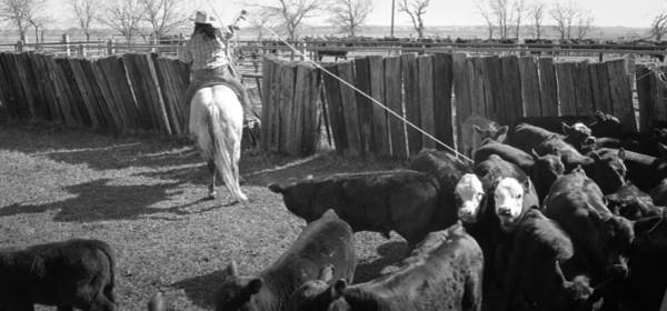 Photograph - Texas 14 by Diane Bohna