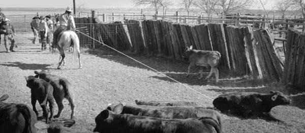 Photograph - Texas 16 by Diane Bohna