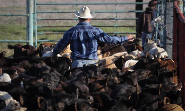 Photograph - Texas 30 by Diane Bohna
