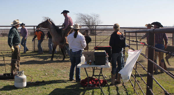 Photograph - Texas 34 by Diane Bohna
