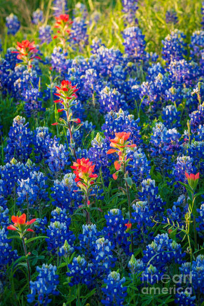 Expanse Photograph - Texas Colors by Inge Johnsson