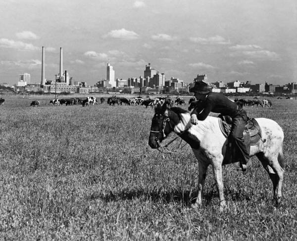 Wall Art - Photograph - Texas Cowboy, C1945 by Granger