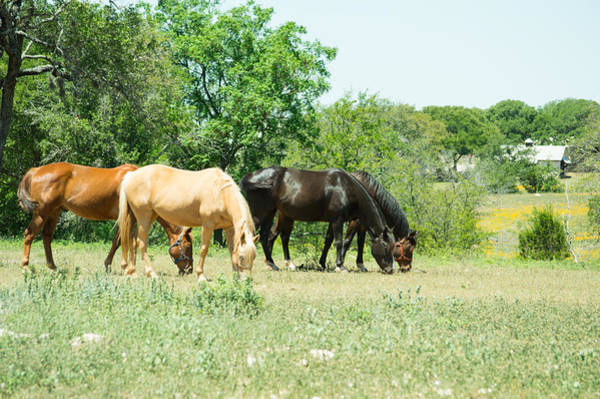 1431 Photograph - Texas Highway 1431 Horses Grazing by JG Thompson