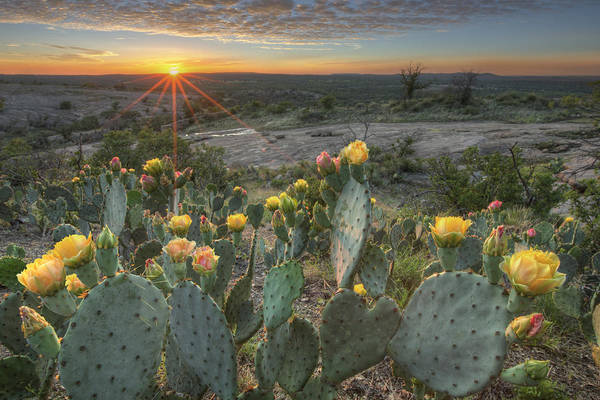 Prickly Pear Photograph - Texas Hill Country Images - Prickly Pear Cactus At Sunset 1 by Rob Greebon