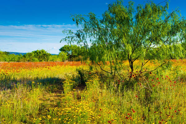 Photograph - Texas Hill Country Wildflowers by Darryl Dalton