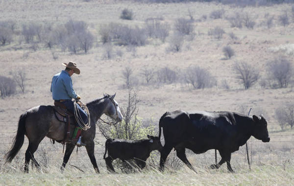 Photograph - Texas Landscape by Diane Bohna