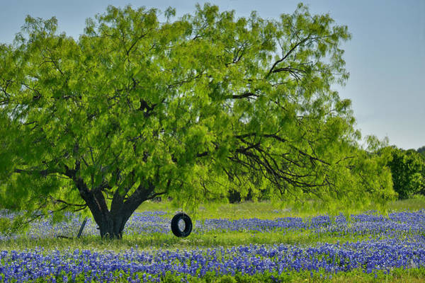 Wall Art - Photograph - Texas Life - Bluebonnet Wildflowers Landscape Tire Swing by Jon Holiday