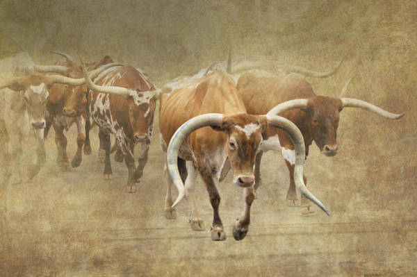 Vogel Photograph - Texas Longhorns 2 by Angie Vogel