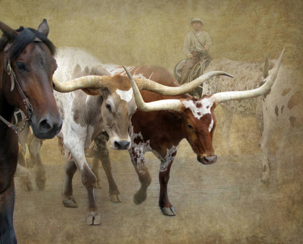 Dusty Photograph - Texas Longhorns by Angie Vogel