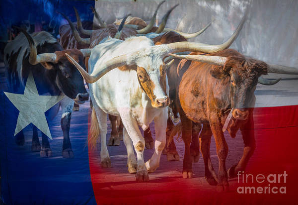 Cattles Photograph - Texas Longhorns by Inge Johnsson