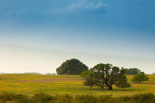 Photograph - Texas Roadside  by Melinda Ledsome