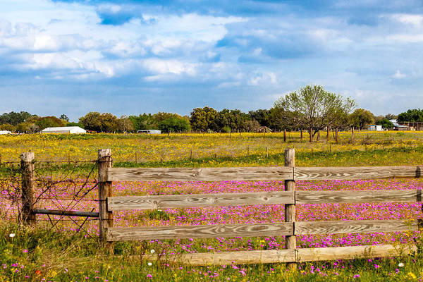 Photograph - Texas Roadside Wildflowers 664 by Melinda Ledsome