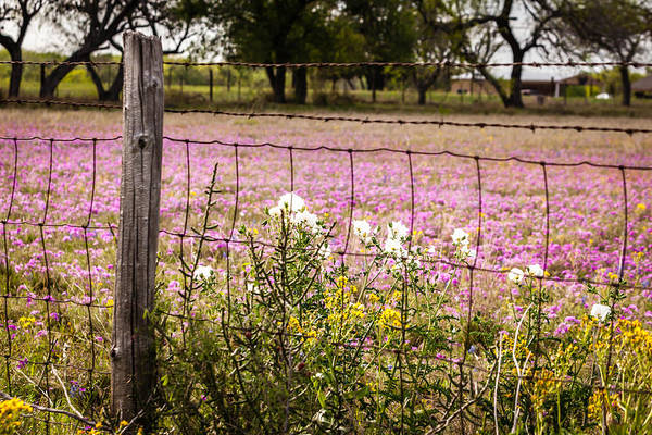 Photograph - Texas Roadside Wildflowers 678 by Melinda Ledsome