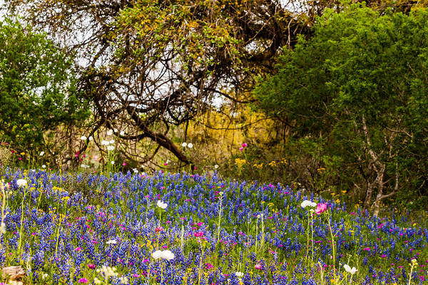 Photograph - Texas Roadside Wildflowers 744 by Melinda Ledsome
