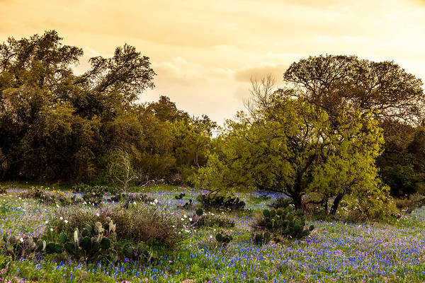 Photograph - Texas Roadside Wildflowers 748 by Melinda Ledsome