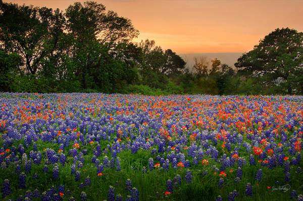 Indian Photograph - Texas Sunset - Bluebonnet Landscape Wildflowers by Jon Holiday