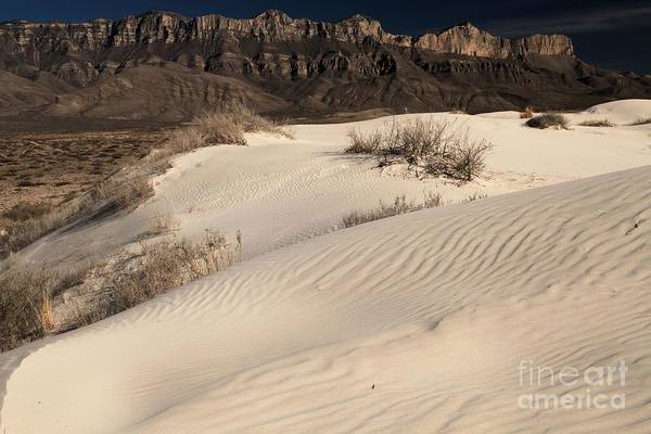 Photograph - Texas White Sands by Adam Jewell
