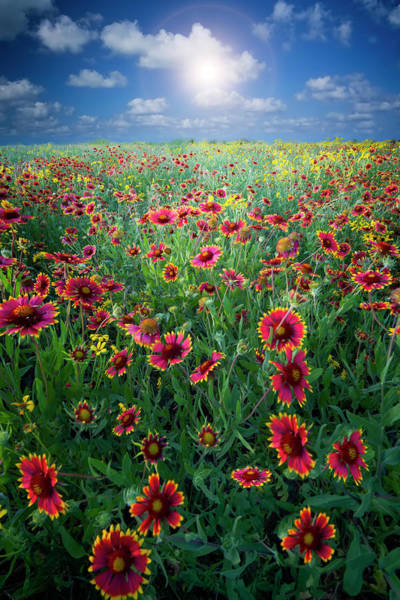 Wall Art - Photograph - Texas Wildflowers by Dean Fikar