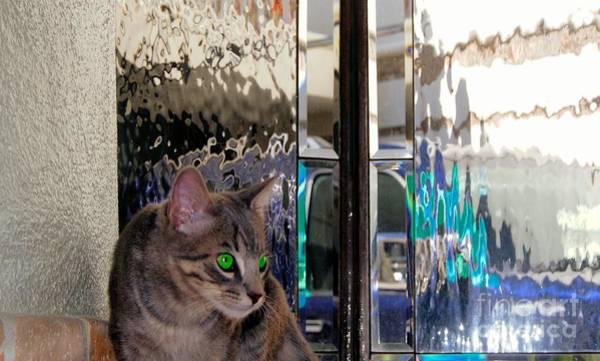Photograph - Texture Kitty  by John  Kolenberg