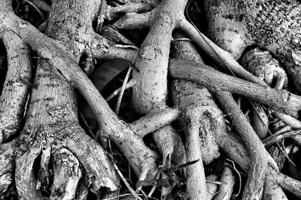 Photograph - Texture N by Pedro Fernandez