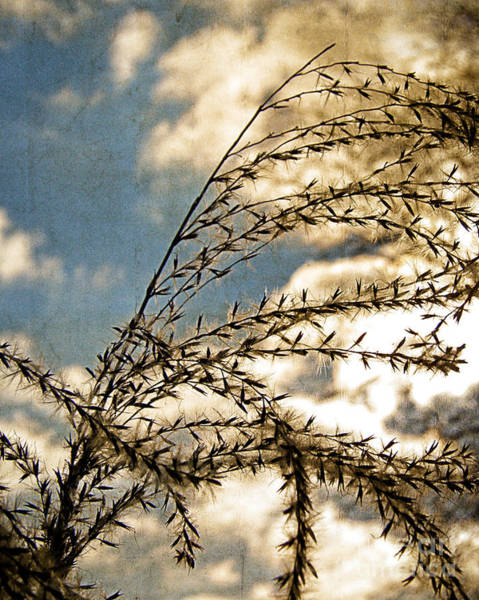 Wall Art - Photograph - Textured Grain by Emily Kelley