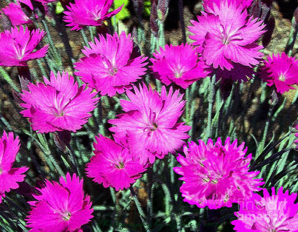 Photograph - Textured Pink Daisies by Gena Weiser