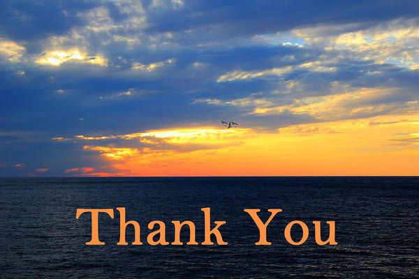 Photograph - Thank You by Shelley Neff
