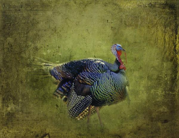 Turkey Feather Wall Art - Photograph - Thanksgiving Is Coming Better Run Better Run by Diane Schuster