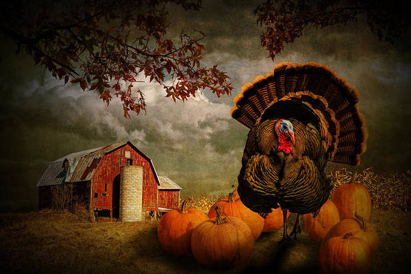 Photograph - Thanksgiving Turkey Among Pumkins by Randall Nyhof