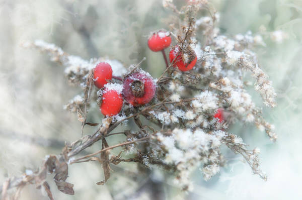 Airy Photograph - That First Snowfall by Susan Capuano