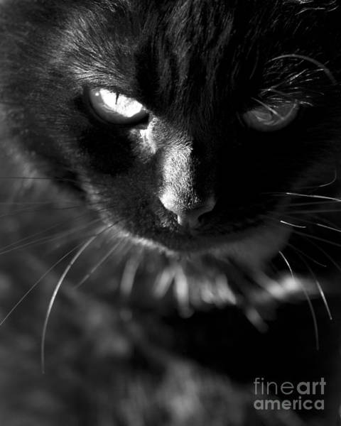 Black Cats Photograph - That Look by Anne Gilbert