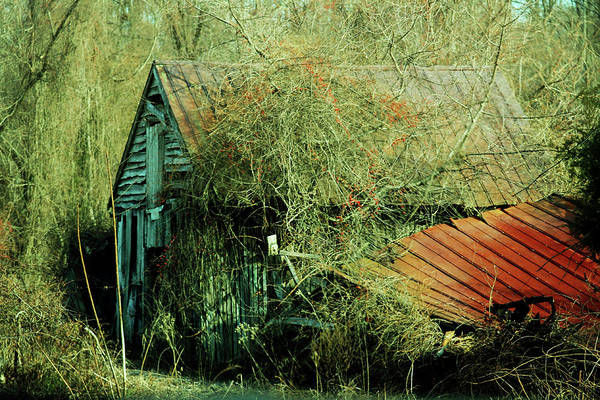 Photograph - That Old Barn by Rebecca Sherman