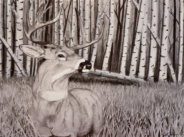 Whitetail Drawing - The 15 by Nicole Grev