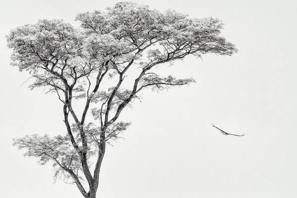 Wall Art - Photograph - The African Eagle by Piet Flour
