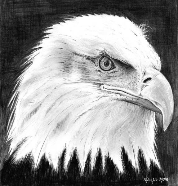 Bald Eagles Drawing - The Amecian Bald Eagle by Mick ODay
