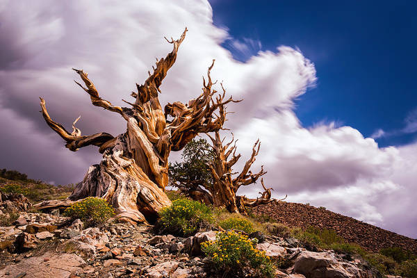 Photograph - The Ancient Ones by Tassanee Angiolillo