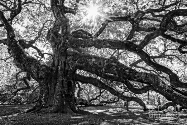 Photograph - The Angel Oak Bw by Deborah Scannell