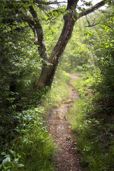 Photograph - The Appalachian Trail by Debra and Dave Vanderlaan