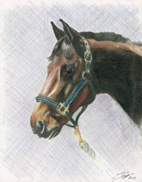 Appaloosa Drawing - The Appy by Laurie Scott