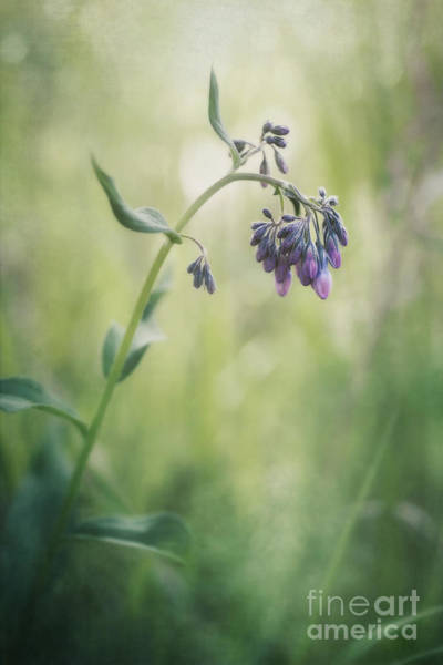 Wild Grass Photograph - The Arrival Of Spring by Priska Wettstein