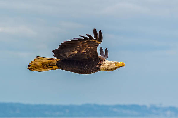 Flying Eagle Photograph - The Art Of Flight by Ian Stotesbury