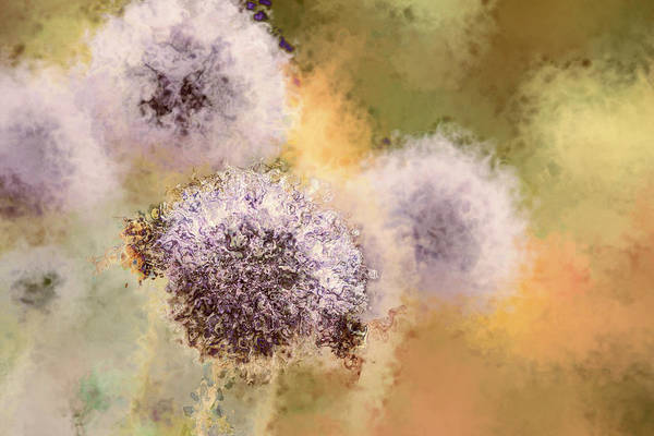 Photograph - The Art Of Pollination by Peggy Collins