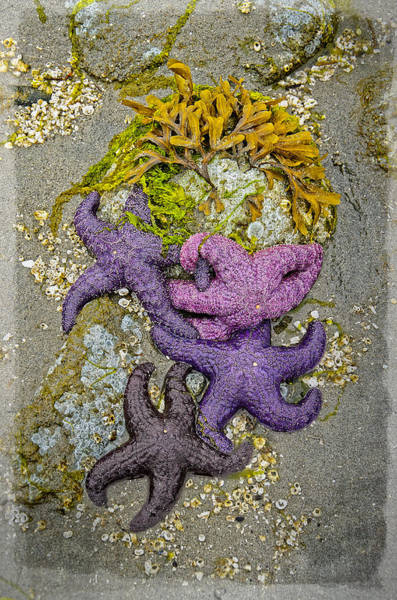 Photograph - The Art Of Starfish by Roxy Hurtubise