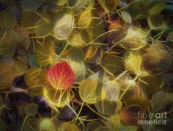 Leave Photograph - The Aspen Leaves by Veikko Suikkanen